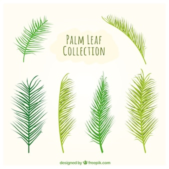 Types of palm leaves set