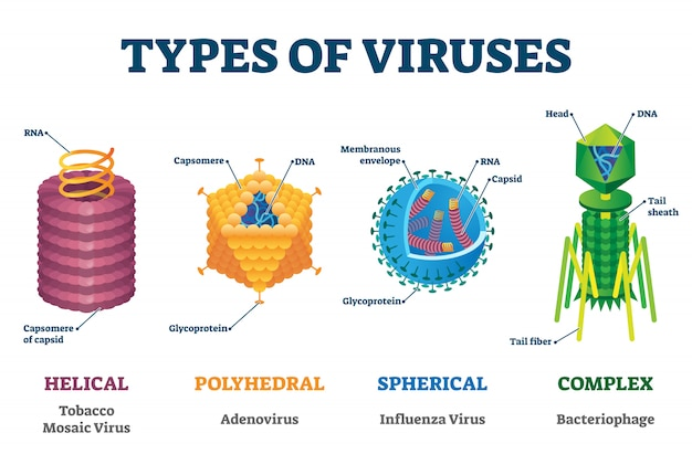 Types of viruses, illustration labeled drawings
