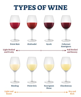 Types of wine   illustration. labeled red and white drink explanation.
