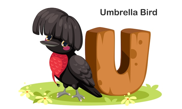 U for umbrella bird