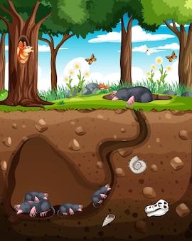 Underground animal burrow with mole family