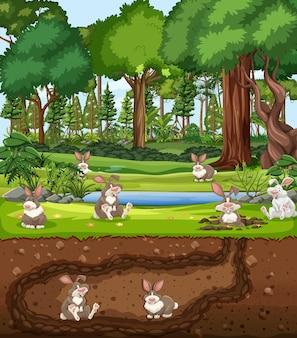 토끼 가족과 함께 지하 동물 굴