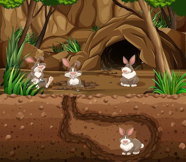 토끼 가족이 있는 지하 동물 굴