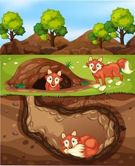 많은 여우가있는 지하 동물 구멍