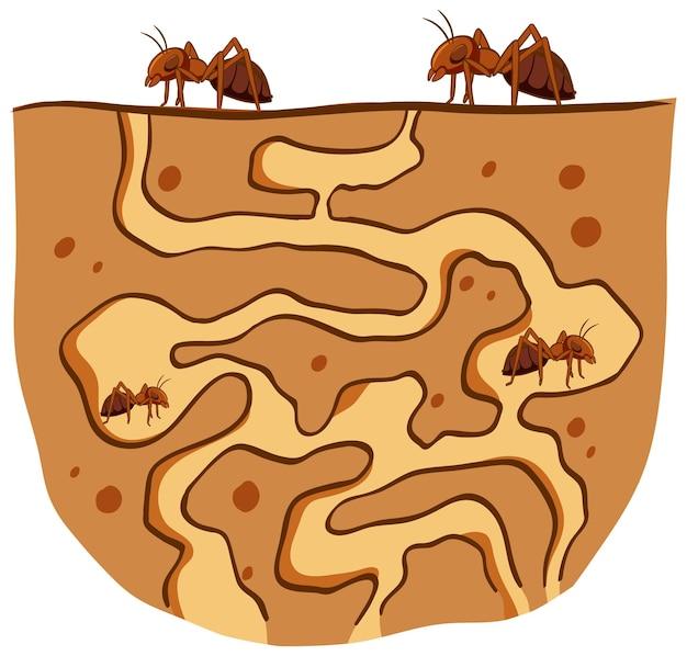 Подземное гнездо муравьев с красными муравьями