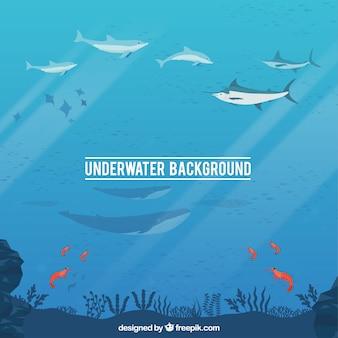 Underwater background with caricatures of aquatic animals