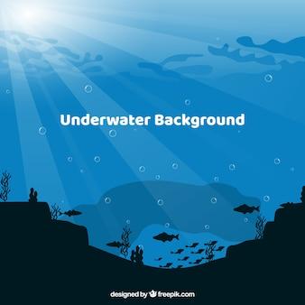 異なる海洋種を持つ水中の背景