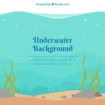 Underwater background with seaweeds