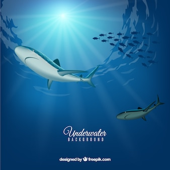 Underwater background with sharks in realistic style