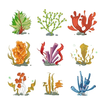 Underwater plants in cartoon vector style. ocean life, underwater sea, nature seaweed illustration