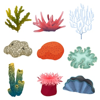 Underwater plants and coral reef