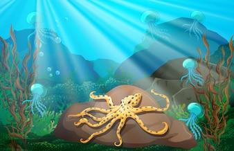 Underwater scene with squid on rock