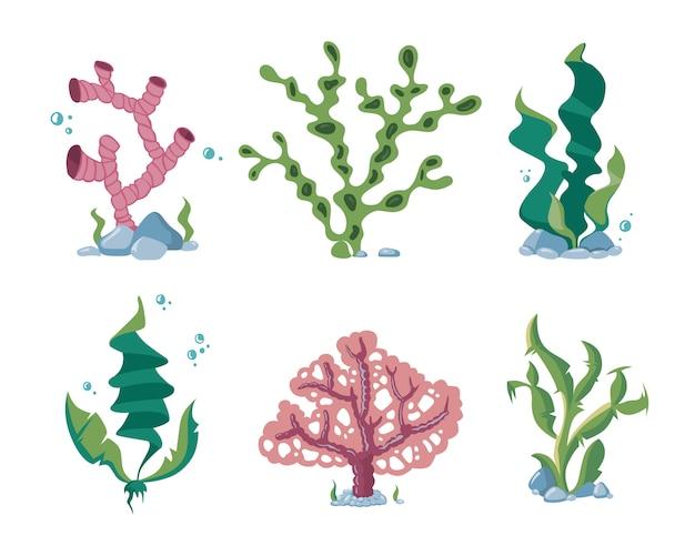 Underwater seaweeds