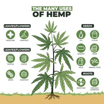 Use of hemp infographic