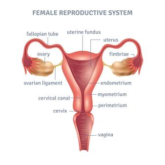 Плакат матки