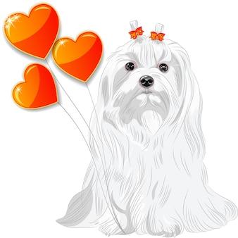 Валентинка с мальтийской собакой и сердечками