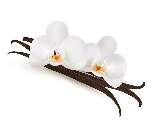 Цветок ванили, изолированные на белом фоне