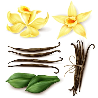 Vanilla plant realistic set with fresh yellow flowers aromatic dried brown beans and leaves isolated