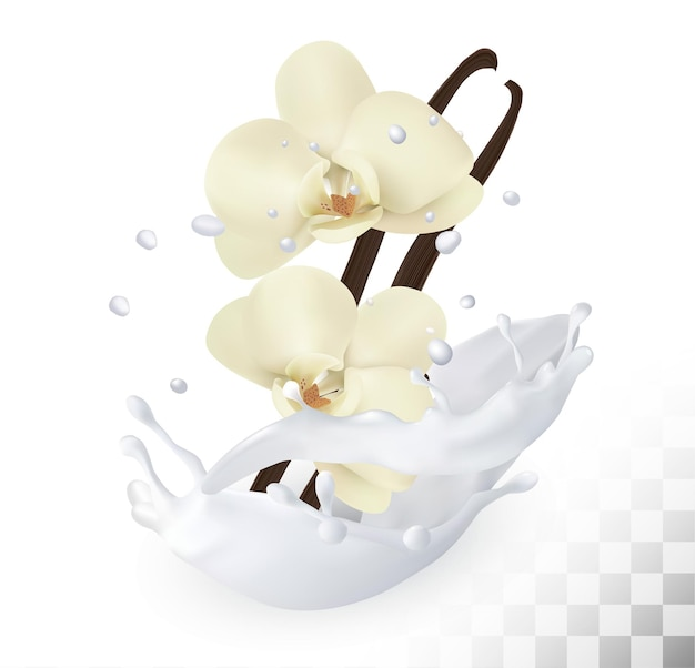 Vanilla sticks with flowers in a milk splash on a transparent background