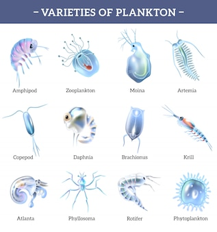 Varieties of plankton isolated icons set with text explanation cartoon  illustration