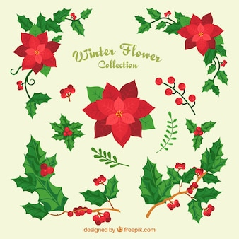 Variety of christmas flowers and mistletoe