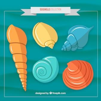 Variety of colored seashells