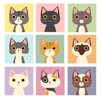 Variety cute cat.