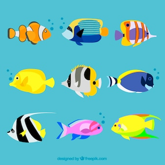 Variety of exotic fishes