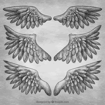 Variety of fantastic realistic wings