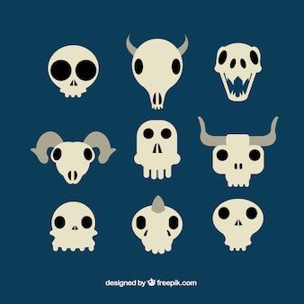 Variety of flat skulls