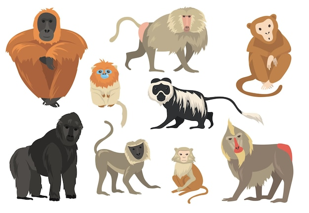 Variety of funny exotic monkeys and apes flat set