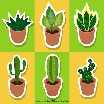 サボテンや植物のラベルの様々な
