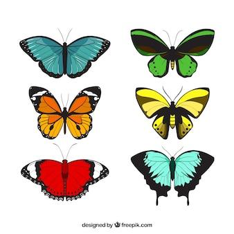 装飾的な蝶の様々な