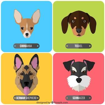 犬の品種のバラエティ Premiumベクター