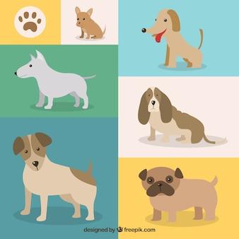 犬の品種のバラエティ