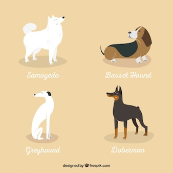 Variety of dog breeds