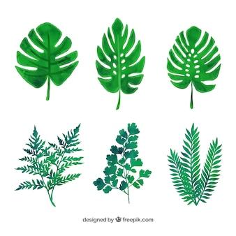 녹색 잎의 다양한