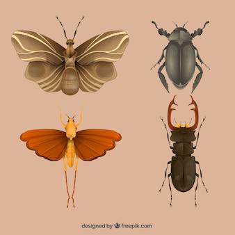 昆虫のさまざまな