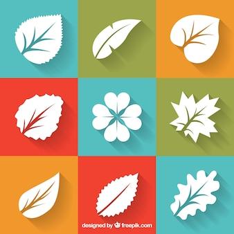 葉の様々な