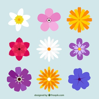 Variety of pretty colored flowers