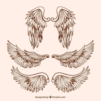 Variety of realistic wings