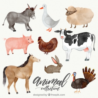Variety of watercolor animals