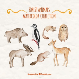 Variety of watercolor wild animals