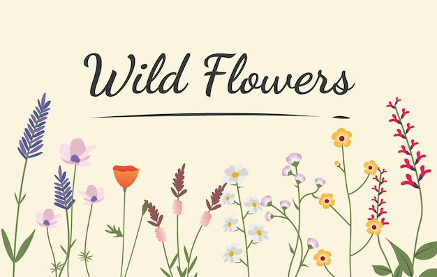 Variety of wild flowers illustration