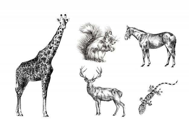 Various animals hand drawn sketches giraffe, horse, gecko, squirrel, deer
