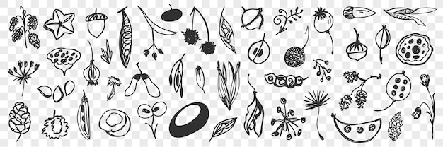 Various beans flowers and cones doodle set