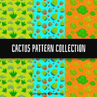 Vari modelli colorati di cactus