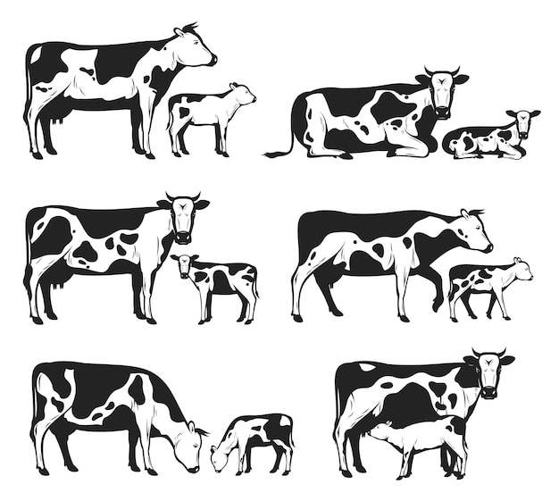 Различные коровы и телята в разных позах