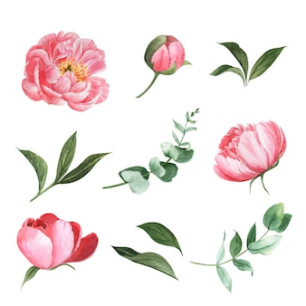 Various flower watercolor set design element