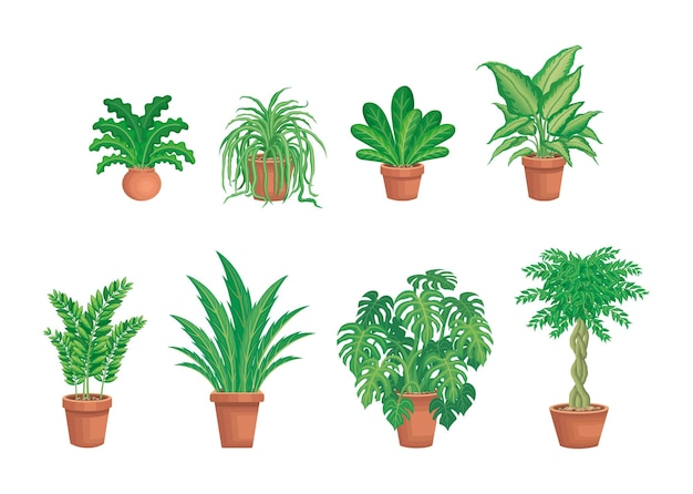 Various green house plants in clay pots flat graphic vector illustration
